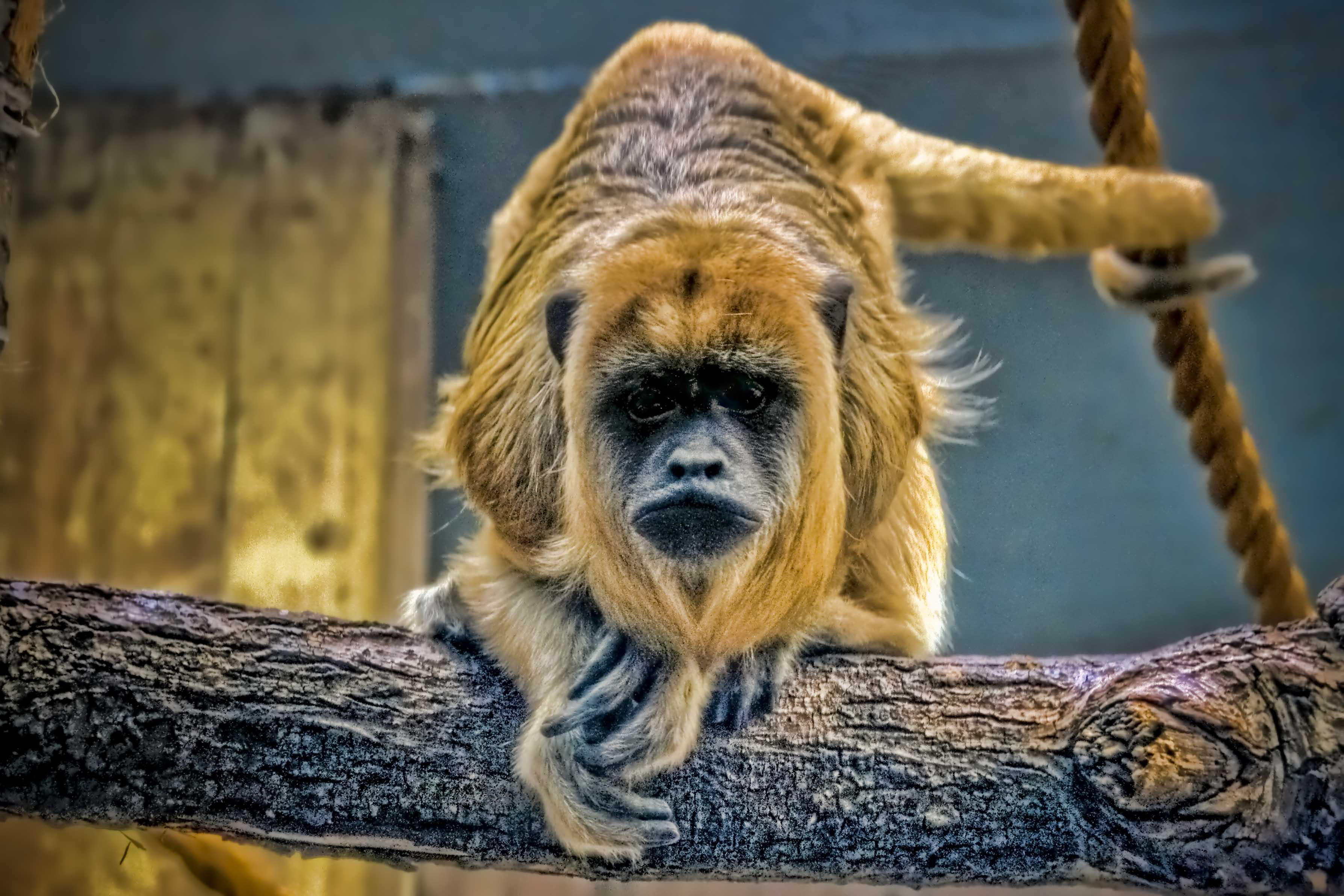 Monkey at the Cleveland Metroparks Zoo