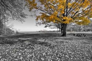 Edgewater Park
